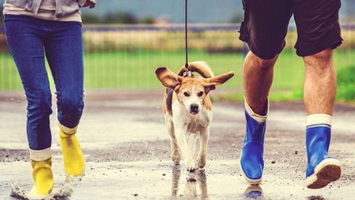 Πώς να απασχολήσετε τον σκύλο σας όταν βρέχει