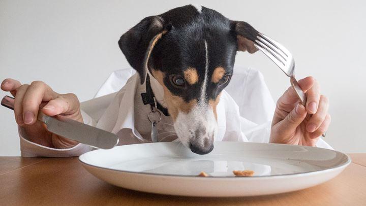Πώς να επιλέξουμε τις κατάλληλες τροφές για το σκυλί μας.fiftififti.eu