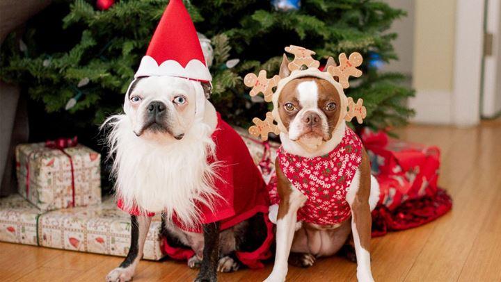 Χριστουγεννιάτικος στολισμός και κατοικίδια – Τι πρέπει να προσέχουμε