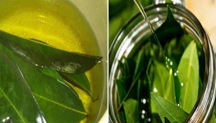 . Βότανα για εγχύματα – Τσάι με φύλλα δάφνης