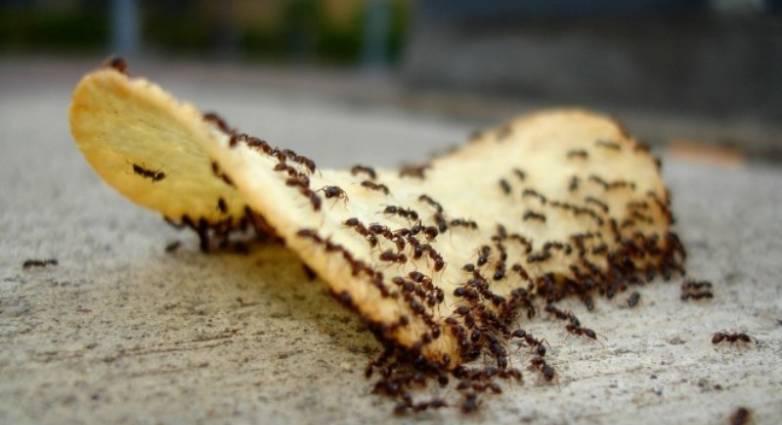 Πώς να διώξετε τα μυρμήγκια από το σπίτι μια και καλή