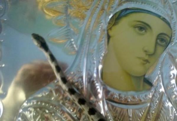 Από τις 06 έως τις 15 Αυγούστου εμφανίζονται τα φιδάκια της Παναγίας στην Κεφαλονιά