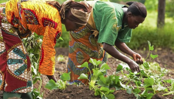 Agrictech startups that are changing the face of farming in Ghana
