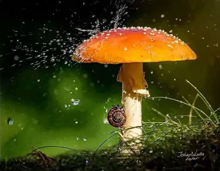 dieren in de regen 7