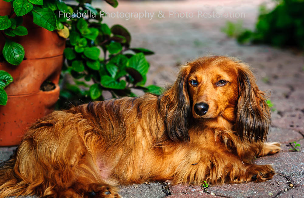 Pet Photographer in Newark Delaware