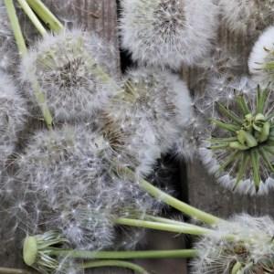 Allergy and Sinus Sprays