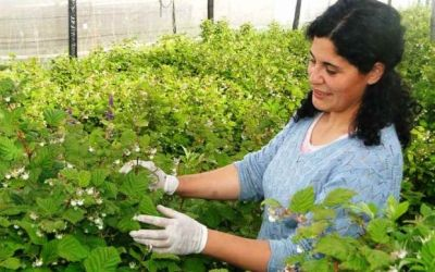 Mujeres rurales: invisibles, indispensables, sobreexigidas
