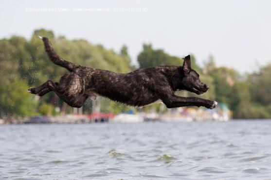 Zim @ Dog Diving // Foto: www.inesmeier.de