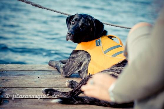 Boots-Hund sein