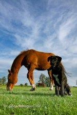 auf Pferde aufpassen