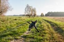 DRK Rettungshundestaffel Havelland — Karte und Kompass 01.11.2014