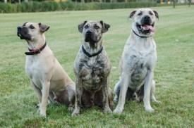 Rumo mit seinen Brüdern Bacan und Batovi