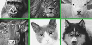 Quienes defienden que los animales sí tienen estatus moral, como los humanos, rechazan su discriminación por especie.