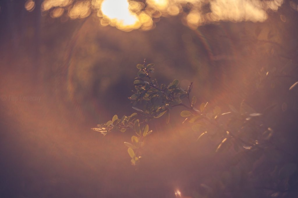 Photo by Filda Konec Photography (www.fildakonecphotography.com)