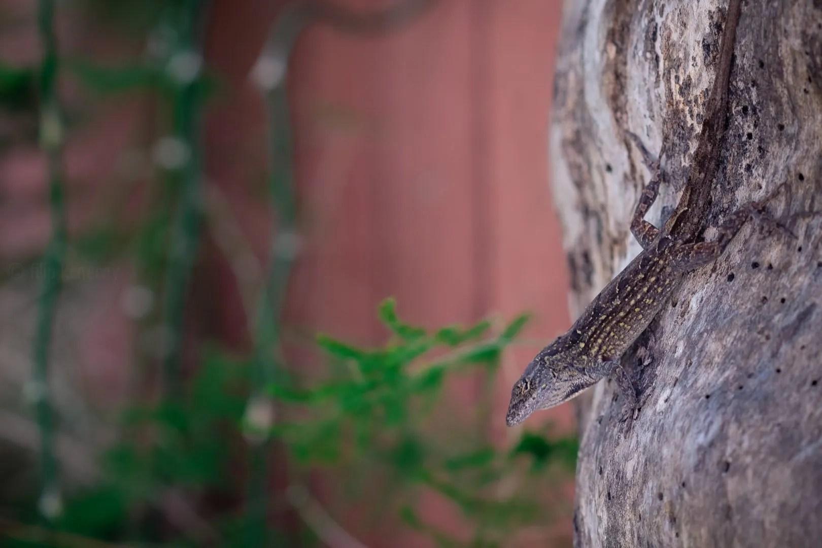 lizard blending on a tree trunk