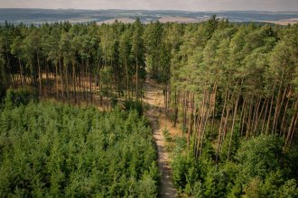 photo of forest from observatory tower