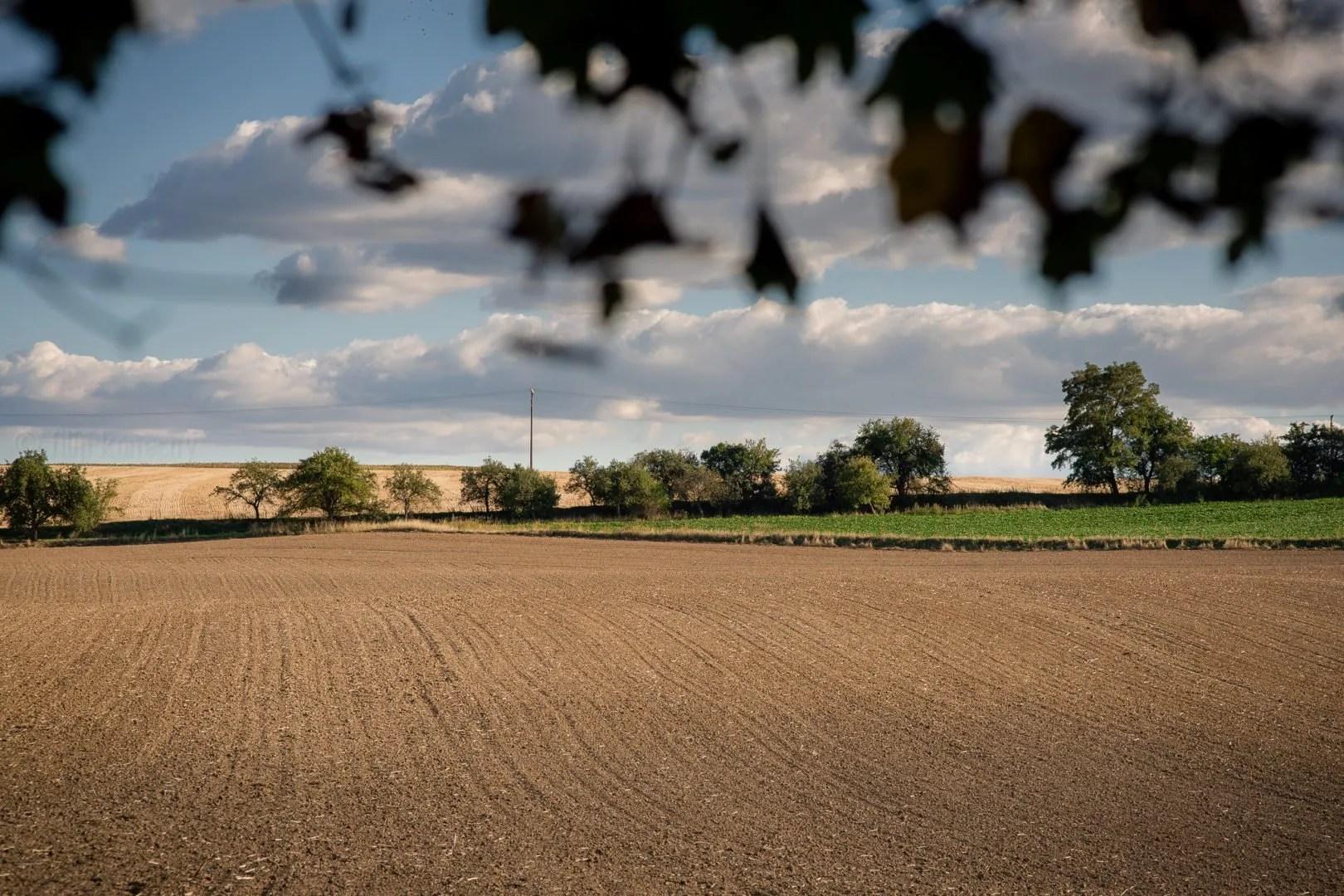 crop field in beautiful landscape late summer near uvaly u prahy