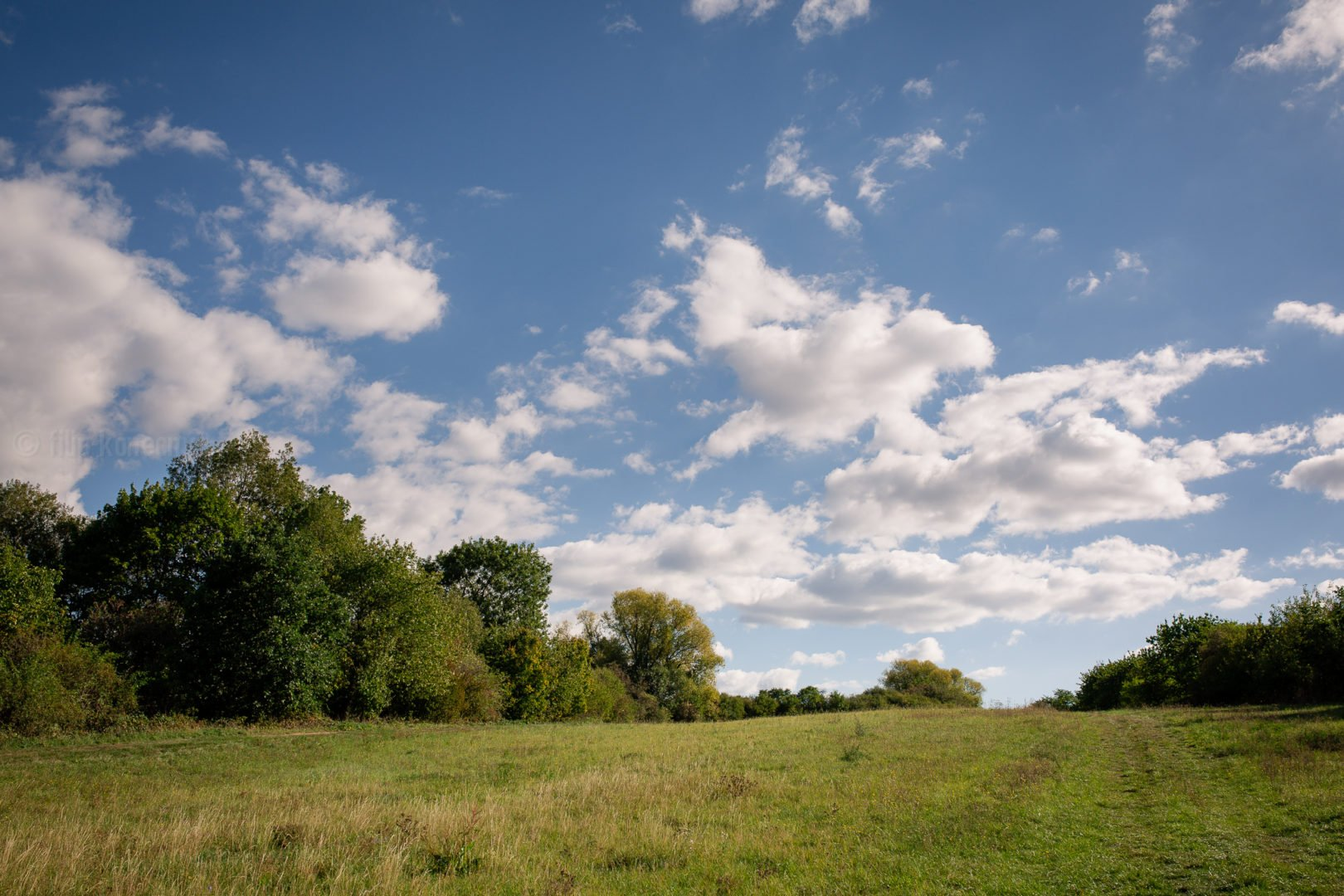 landscape with meadow, trees and cloudy sky