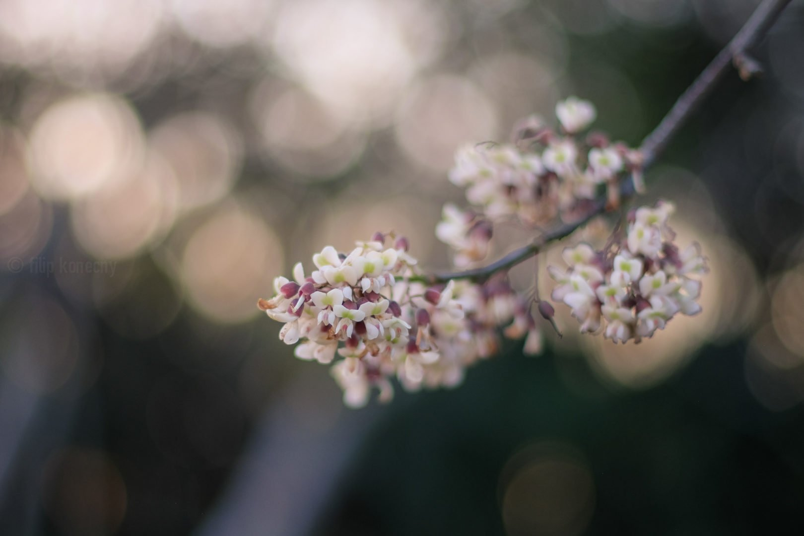 close up of tree flower