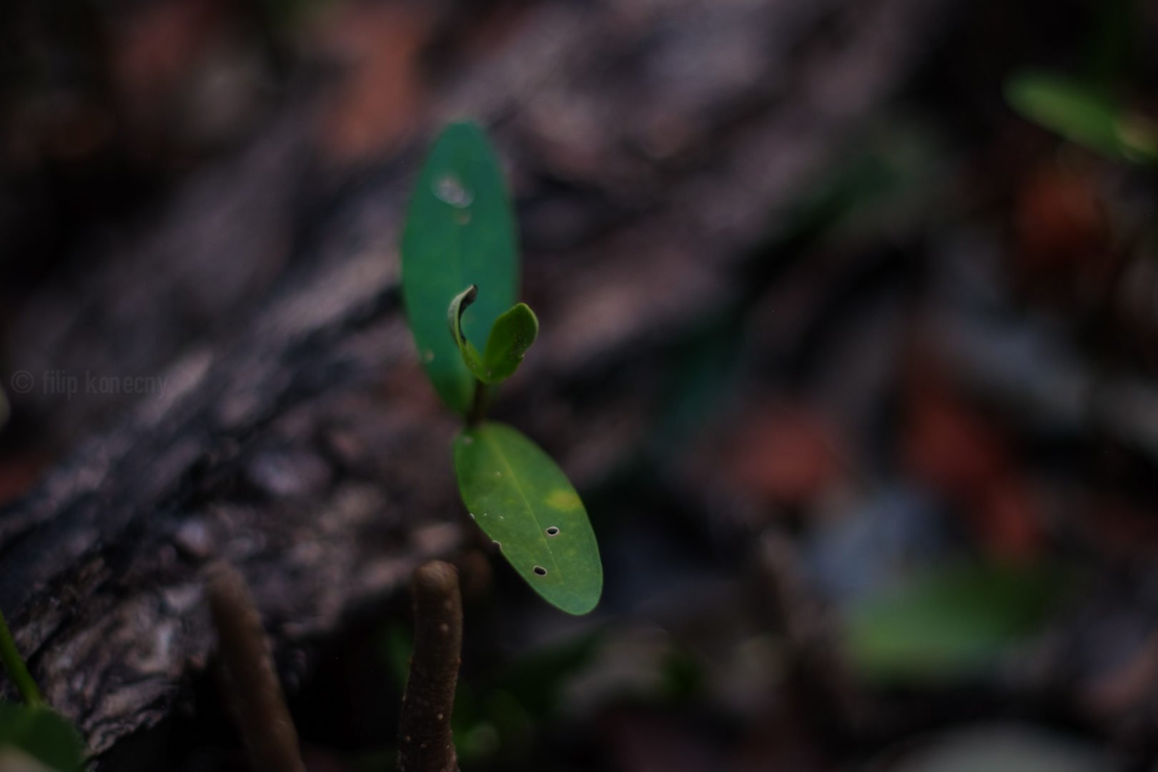 new life sprouting in florida wetland