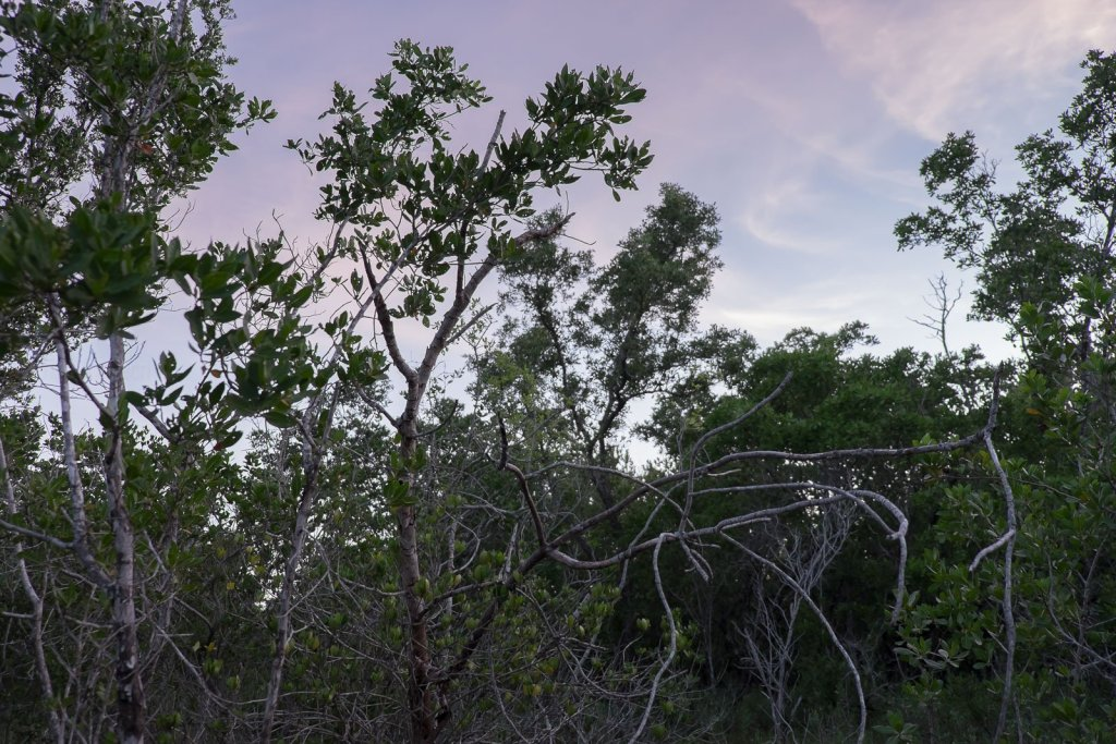 landscape photo of florida keys with trees