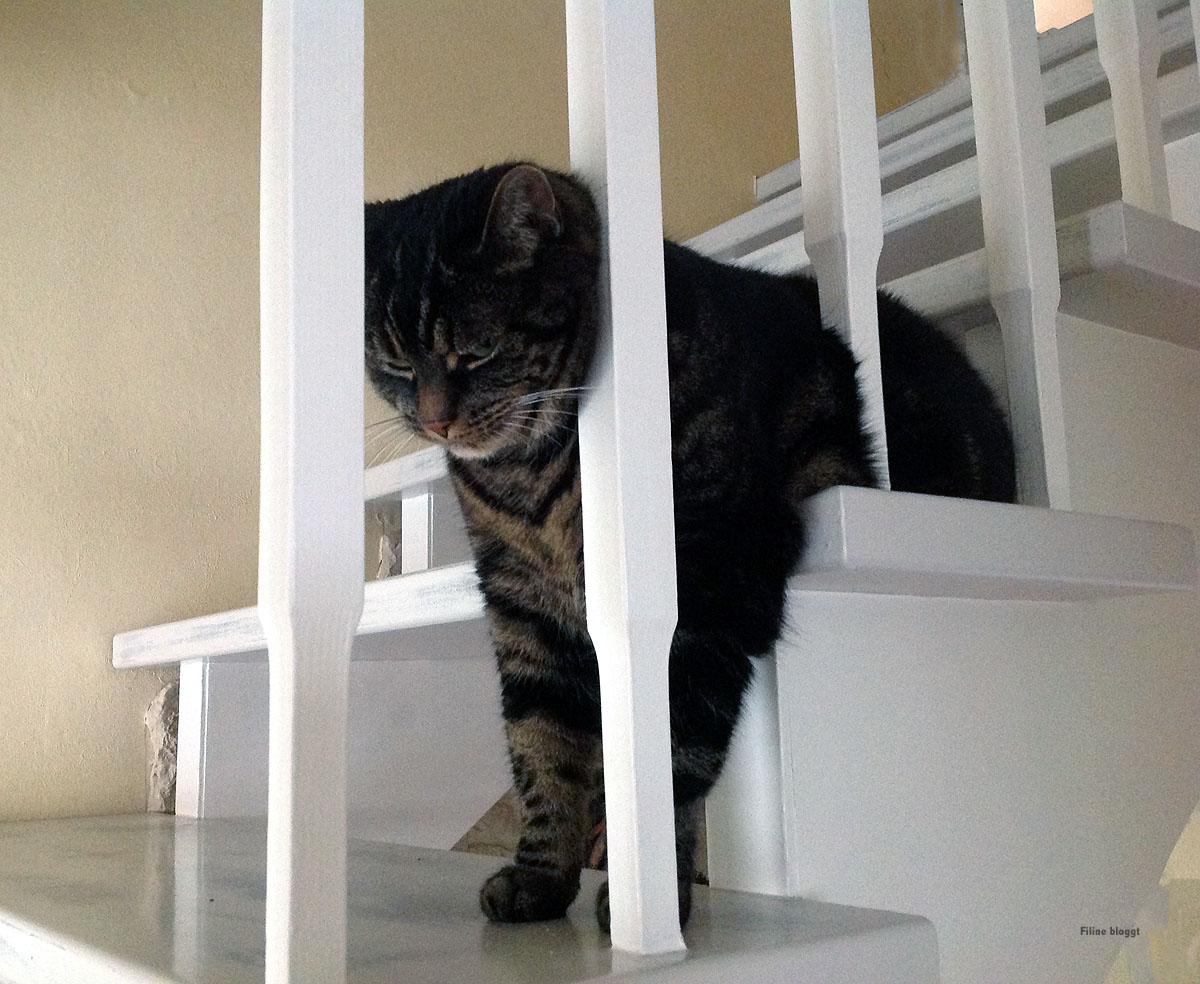 Treppe im Haus überarbeiten-Handwerk hat Tradition!