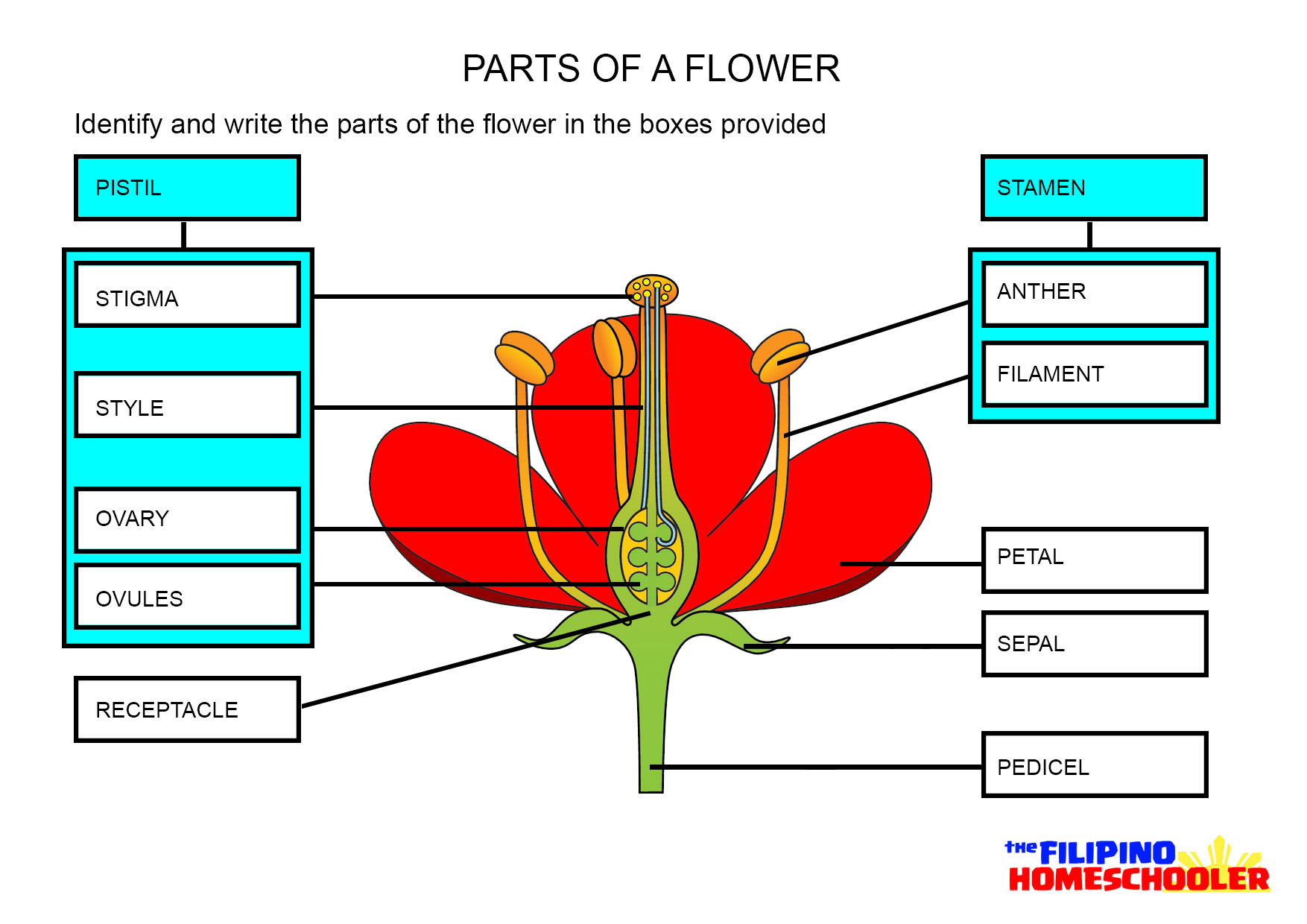 Parts Of A Flower Worksheet The Filipino Homeschooler