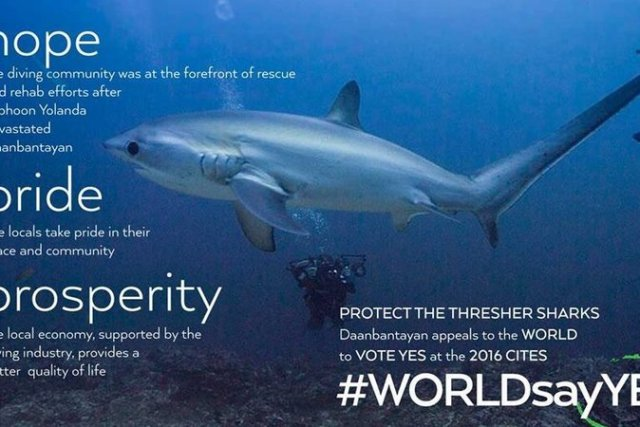 #PHSayYes – Urgent action needed to save thresher sharks from extinction