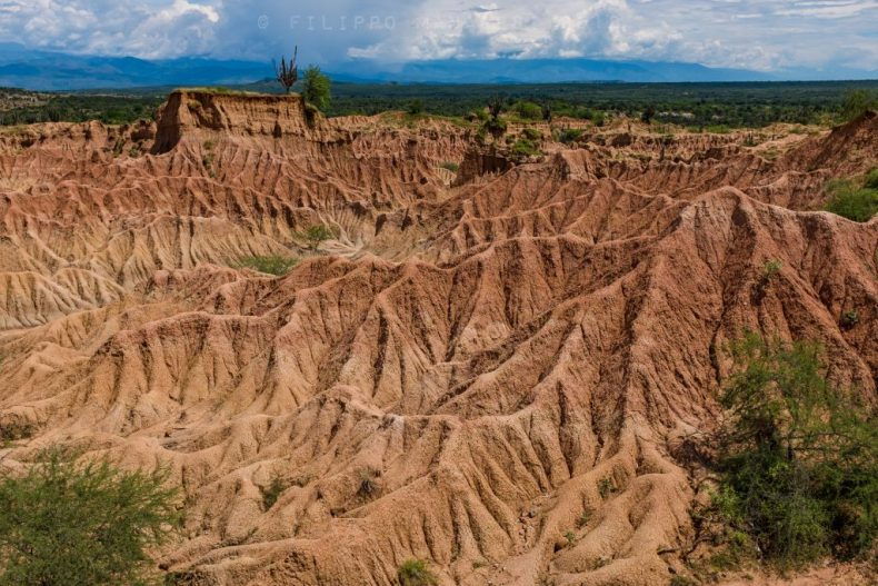 Tatacoa Desert, Huila, cactus, landscape, Colombia