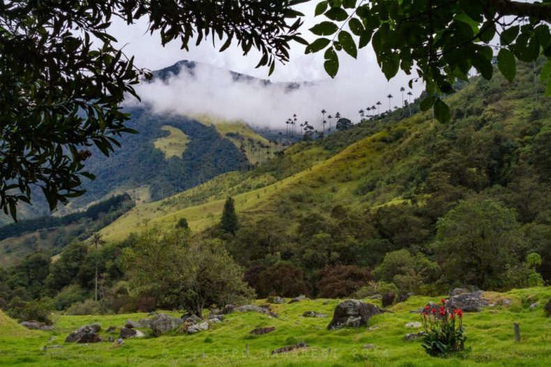 Valle de Cocora, Quindío, Cocora valley, Andes, mountains, palm trees, landscape, wax palms, Colombia