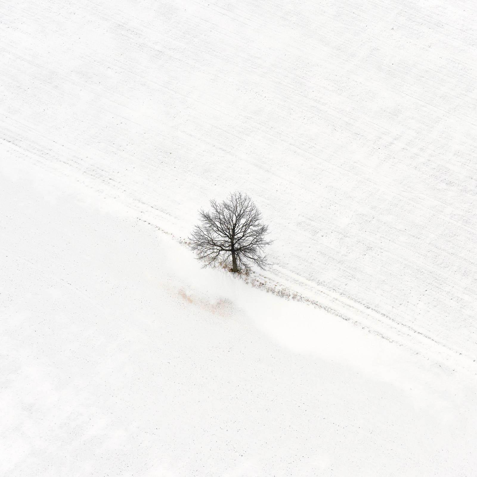 01 Lone Tree