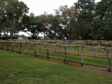 Keel and Curley Vines