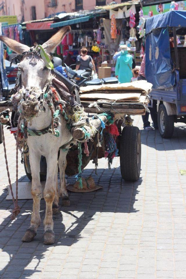 ane a marrakech
