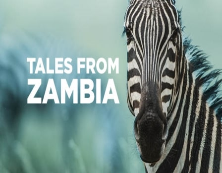 Download Serial Tales From Zambia 480p 720p 1080p