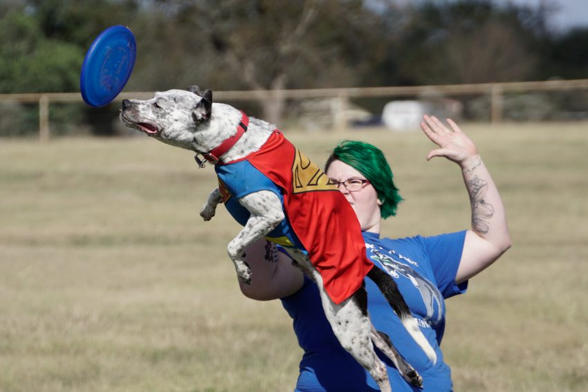 Flying Disc Dogs at Windsong Farm Texas with the Sony Alpha 6500