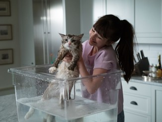una-vita-da-gatto