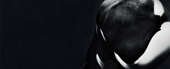 Image result for blackfish movie