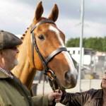 dark-horse-filmloverss