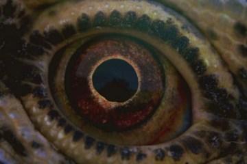 terrence-malick-belgeseli-voyage-of-time-filmloverss