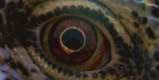 terrence-malick-belgeseli-voyage-of-time-gorsel-1-filmloverss