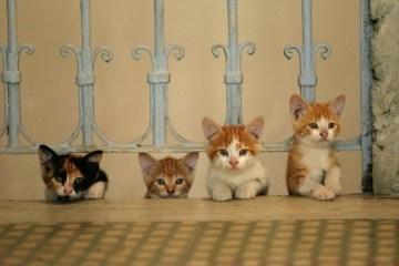 ceyda-torun-kedi-filmloverss