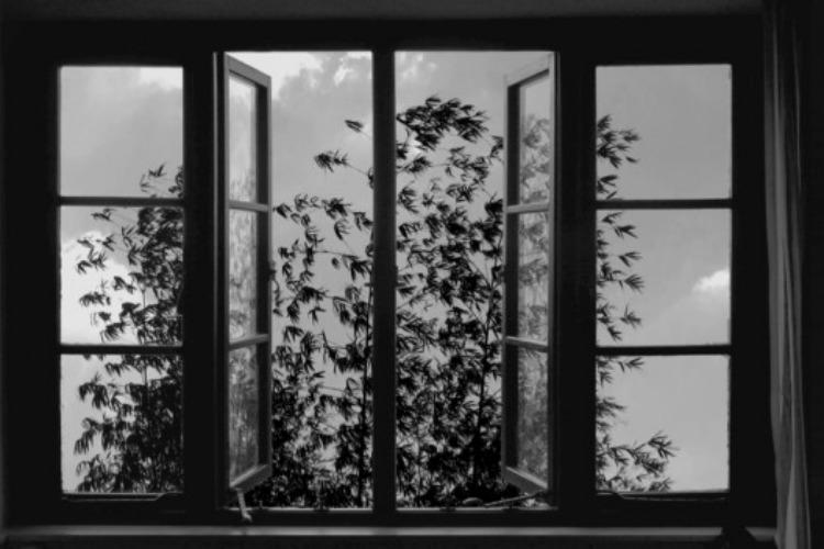 24-frames-abbas-kiarostami-4-filmloverss