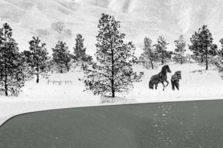 24-frames-abbas-kiarostami-filmloverss