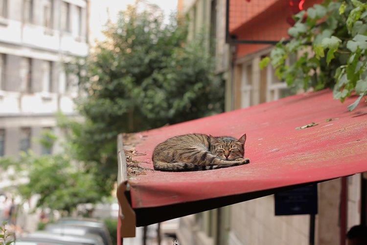 kedi-belgesel-filmloverss