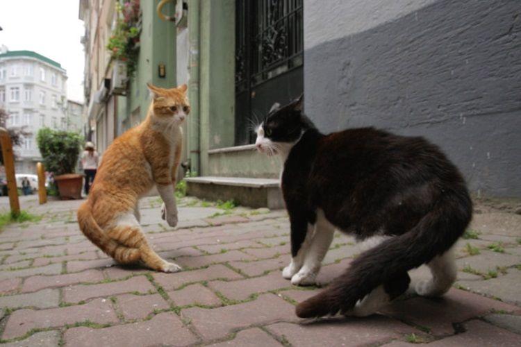 2018-oscarları-için-aralarında-kedinin-de-olduğu-170-belgesel-ile-rekor-kırıldı-2-filmloverss