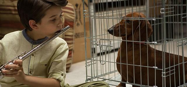 Wiener Dog (2016) DVD Review