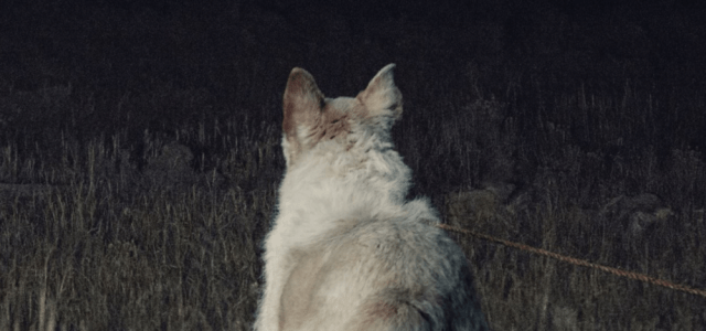 Bone-Chilling New Trailer & Poster For It Comes At Night