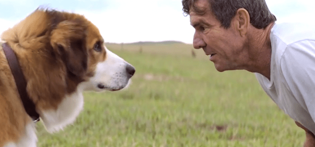 A Dog's Purpose Home Entertainment Release Details