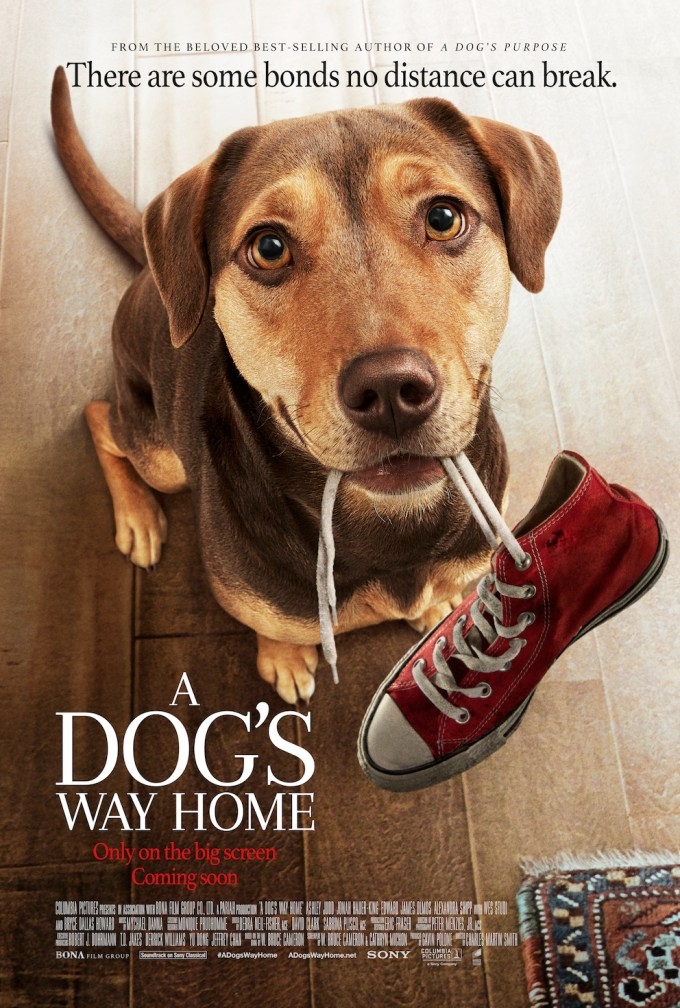 A Dog's Way Home Download Movie