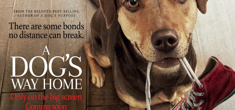 A DOG'S WAY HOME releases into UK cinemas January 25, 2019